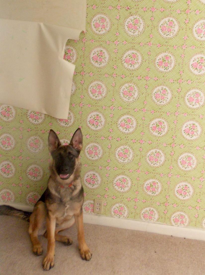 Wallpaper removal 2 .jpg